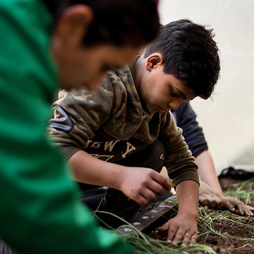 Jerash camp planting