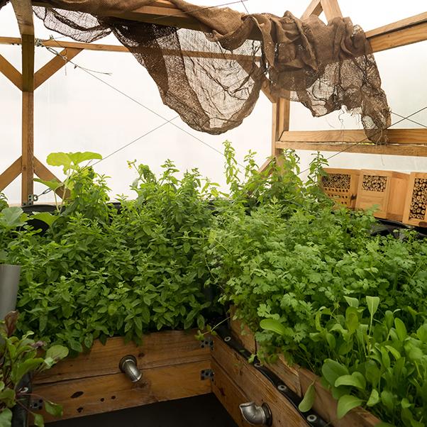 Jadal greenhouse
