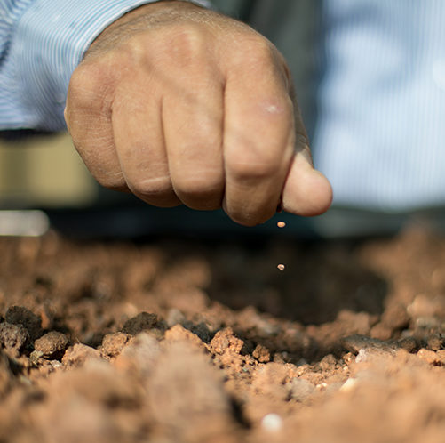 seed planting Jerash camp